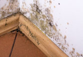 Mold Mitigation